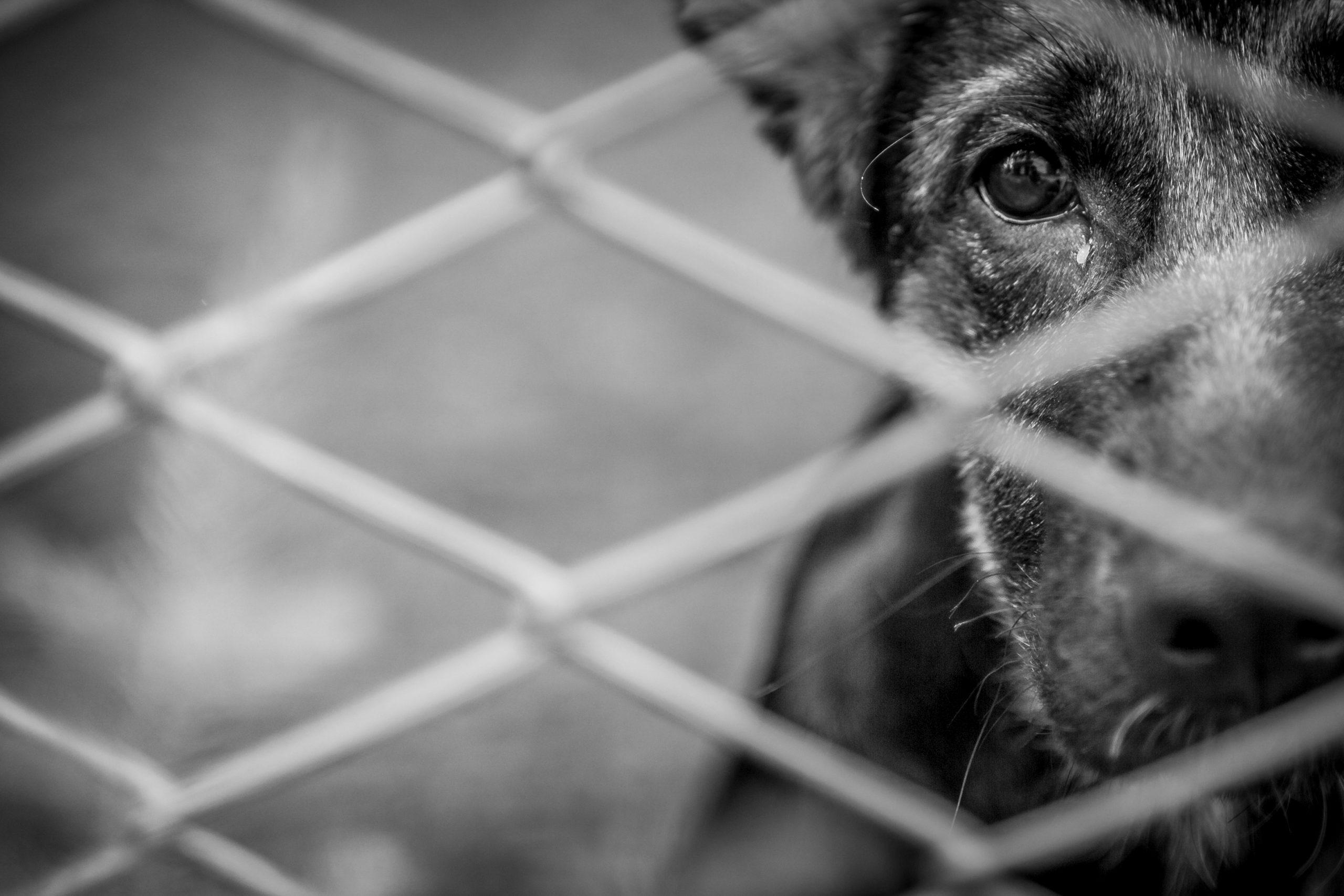 Signaler vidéos et photos cruauté animal